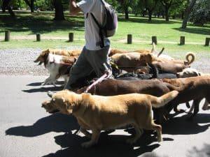 Dog_walker_-_Buenos_Aires