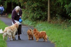 australian-terrier-164087_1280