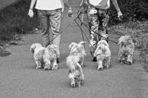 little-dogs-3430120_1920